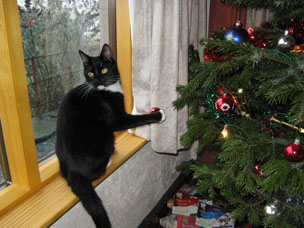 cat xmastree